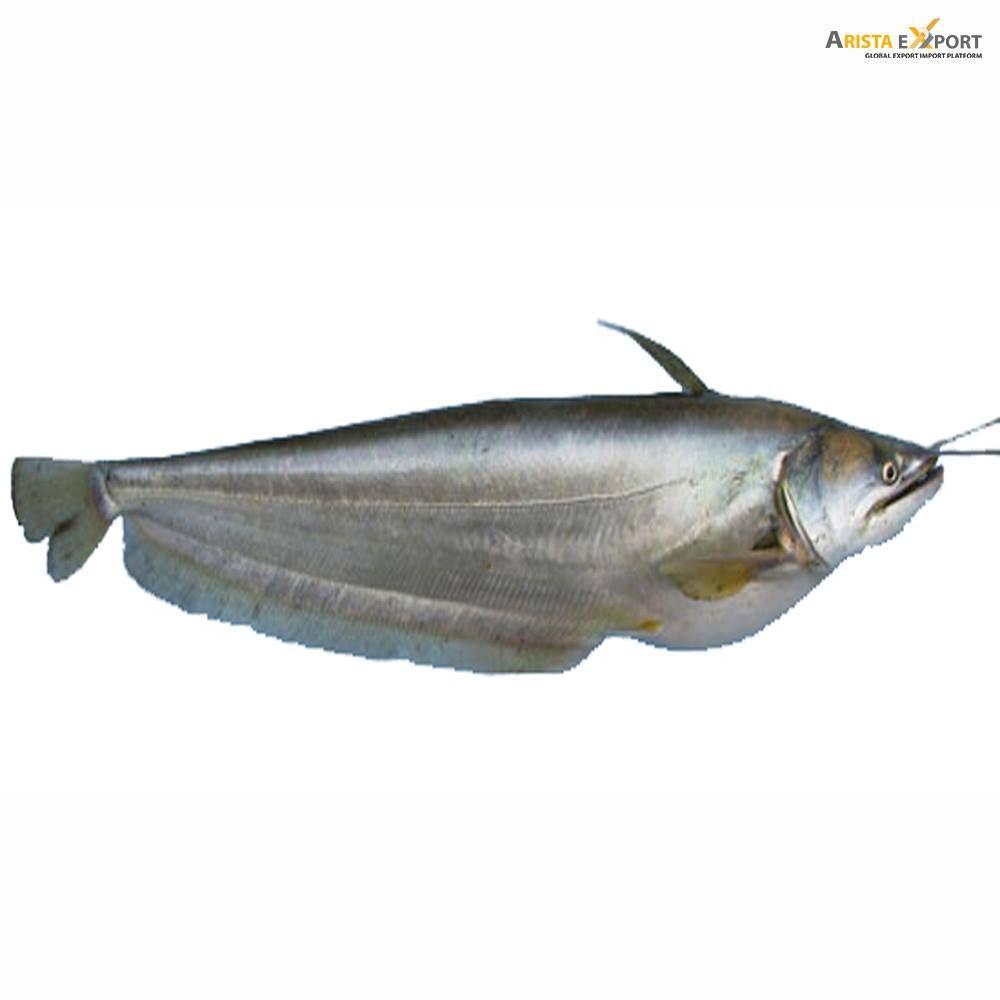 Boal Fish (400-600 gm)